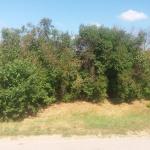 Likvidácia zeleného plota