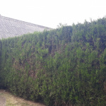 Zbehy - strihanie živých plotov